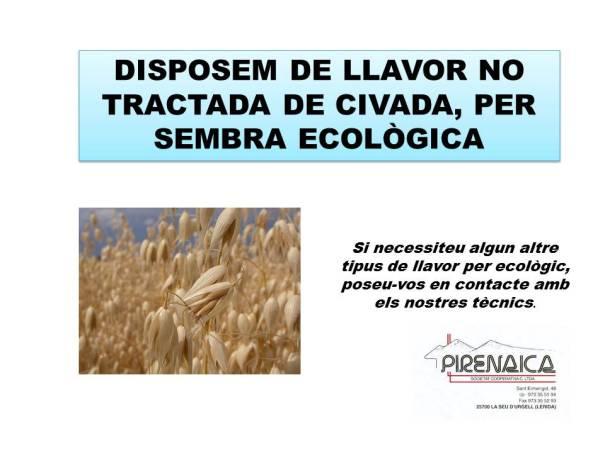 cartell-civada-sembra-ecologica